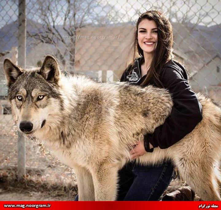 تعبیر خواب زندگی با گرگ