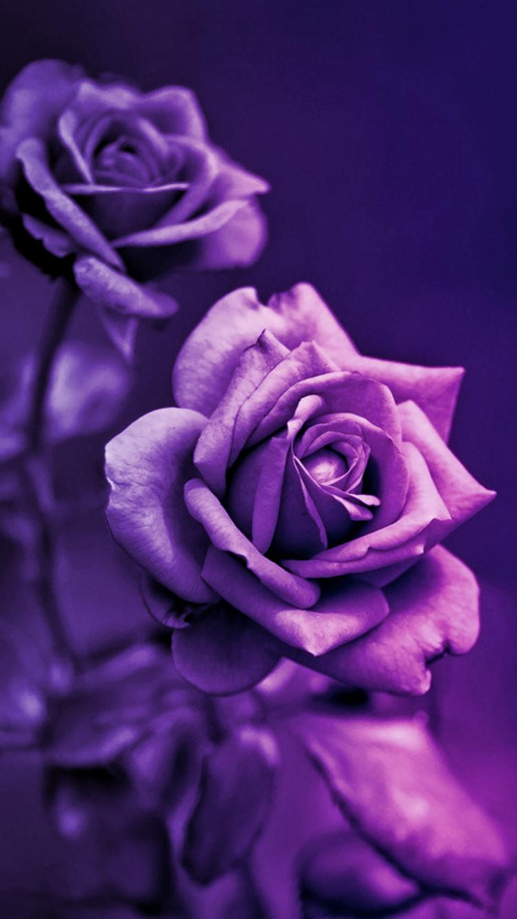 تصویر زمینه گل بنفش