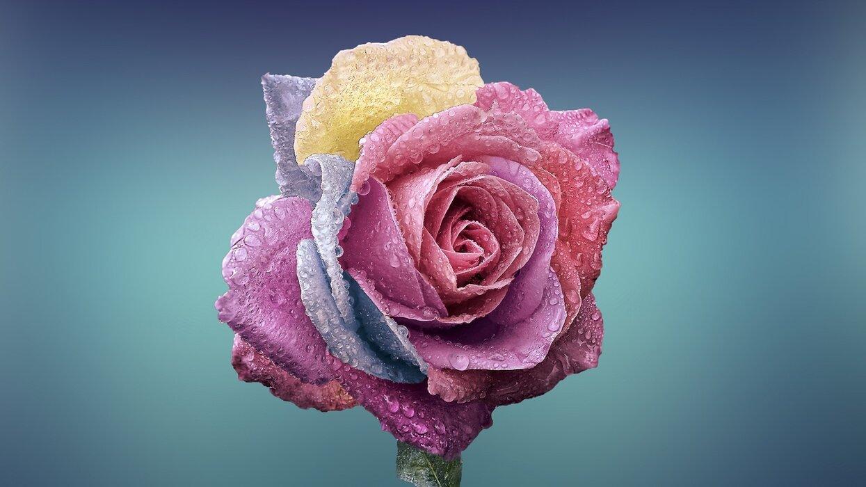 والپیپر گل لاله