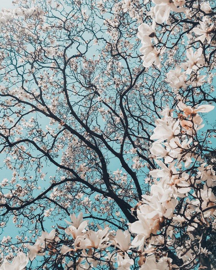 تصویر زمینه گل (5).jpg