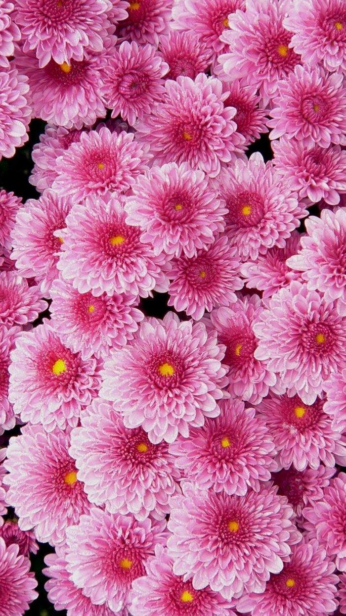 تصویر زمینه گل (1).jpg