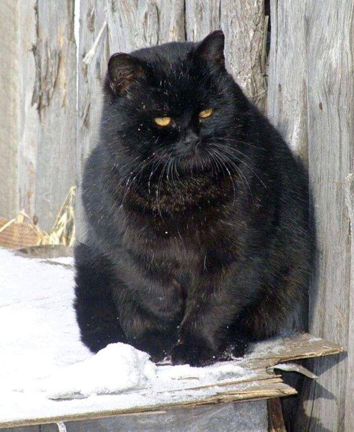گرله چاق سیاه.jpg