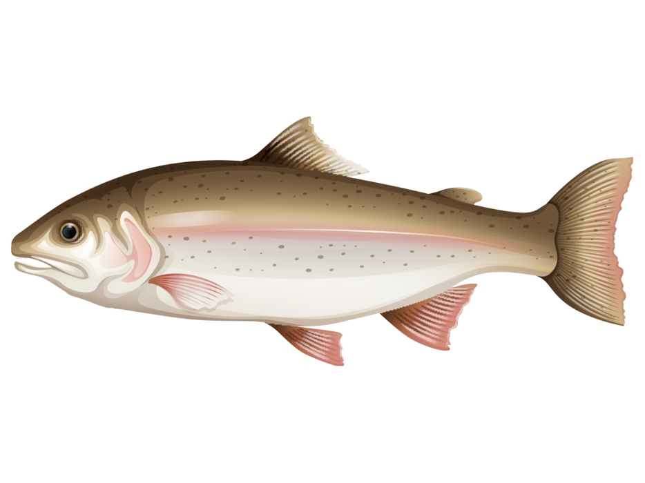 وکتور ماهی.png
