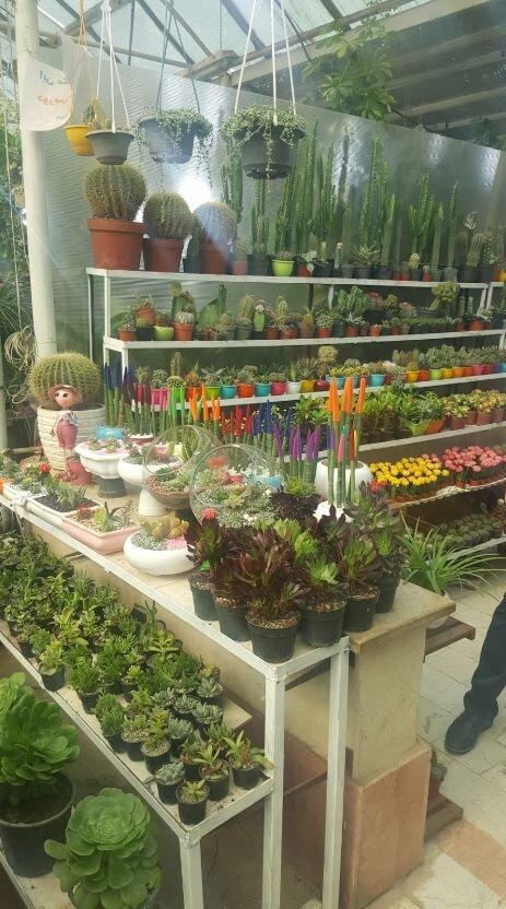 بازار گل و گیاه غرب تهران (3).jpg